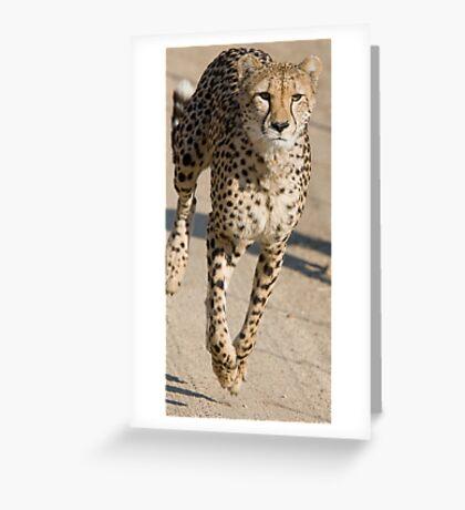 Cheetah On the Run Greeting Card