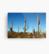 Mighty Saguaro  Metal Print