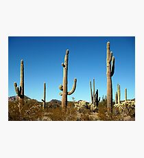 Mighty Saguaro  Photographic Print