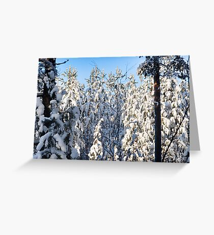 A Birch On White Pines Greeting Card