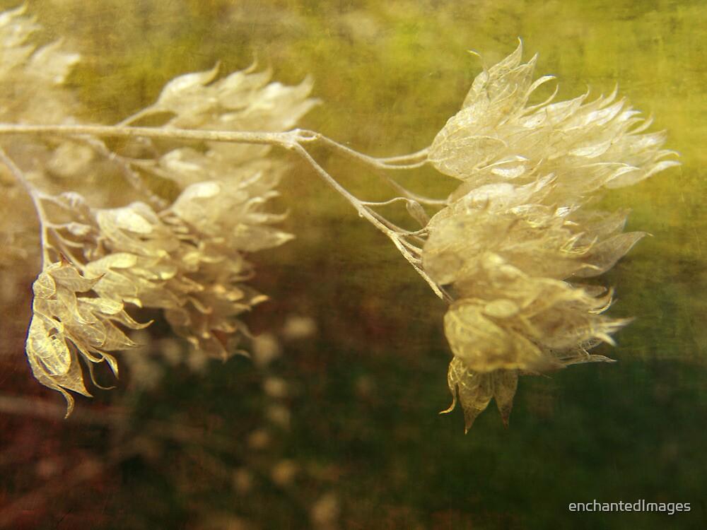Tenacity by enchantedImages