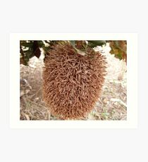 'FLUFFY DUSTER!' I don't think so, Banksia caleyi Art Print