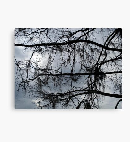 Bare Branches - December in Bayou George, FL Canvas Print