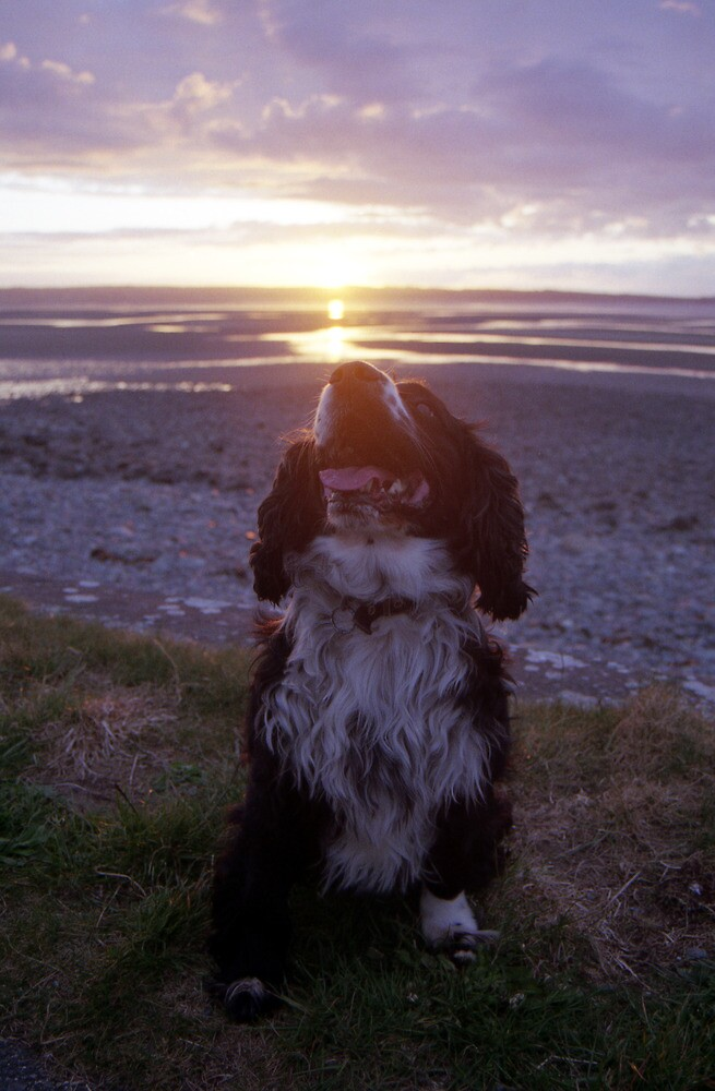 Jack at Sunset by Michael Haslam