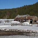 Winter in the Sierra by Patty Boyte