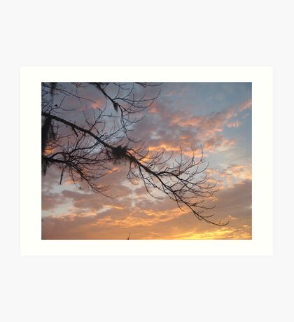 FEBRUARY:  GUM TREE BRANCH AT SUNSET Art Print