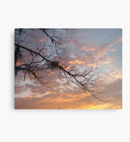 FEBRUARY:  GUM TREE BRANCH AT SUNSET Metal Print