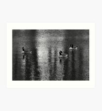Geese at Lake Art Print