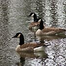 Geese on the Lake by Sherry Durkin