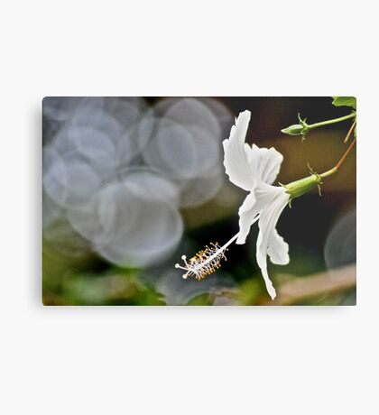 Her Bokeh focus in the garden...: On Featured: A-meaningful-moment Group Metal Print
