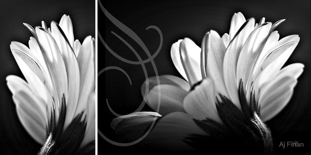 Petals by Aj Finan