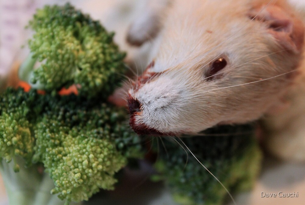 Rat and Broccoli by Dave Cauchi