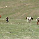 Wild Horses in Montana, by AnnDixon