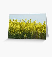 Cressy Canola Greeting Card