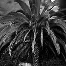 Palm Tree in Full Moon by RatManDude