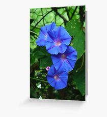 Blue morning glory, Ipomoea indica Greeting Card