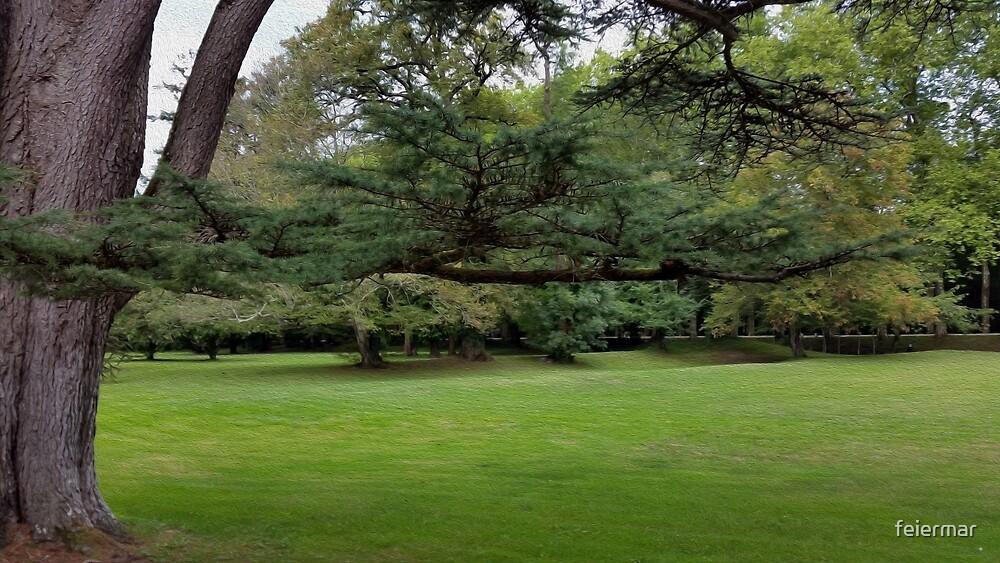 large tree branch by feiermar
