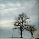 Blue Fog III by Mary Ann Reilly