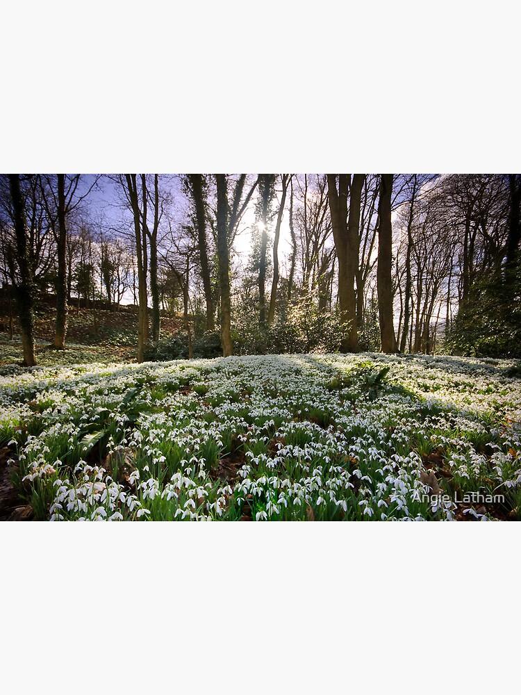 Snowdrop Woods by AngelaBarnett