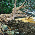 The Dreaming Tree by Cary McAulay