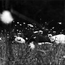 slumbers sweet embrace... by caradione