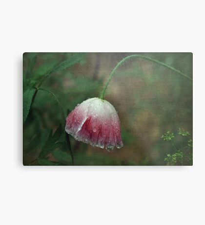 Soggy Poppy Metal Print