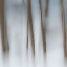 Winter Woods by Lynn Wiles