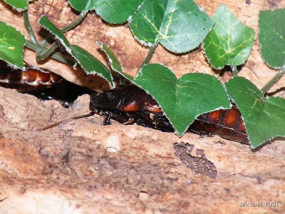 Madagascan Hissing Cockroach (Gromphadorhina portentosa) by Michaela1991