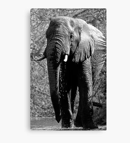 Elephant Spa Canvas Print