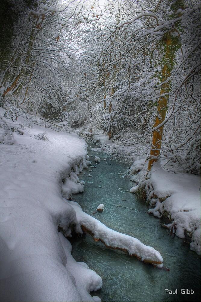 Snowy Stream by Paul  Gibb
