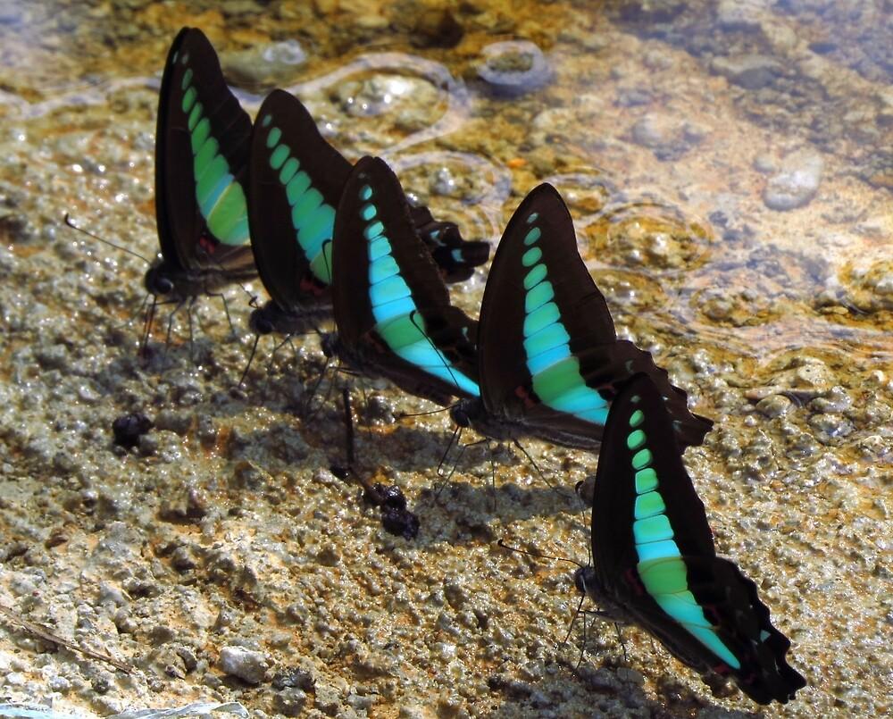 Thai butterflies by chaosteam