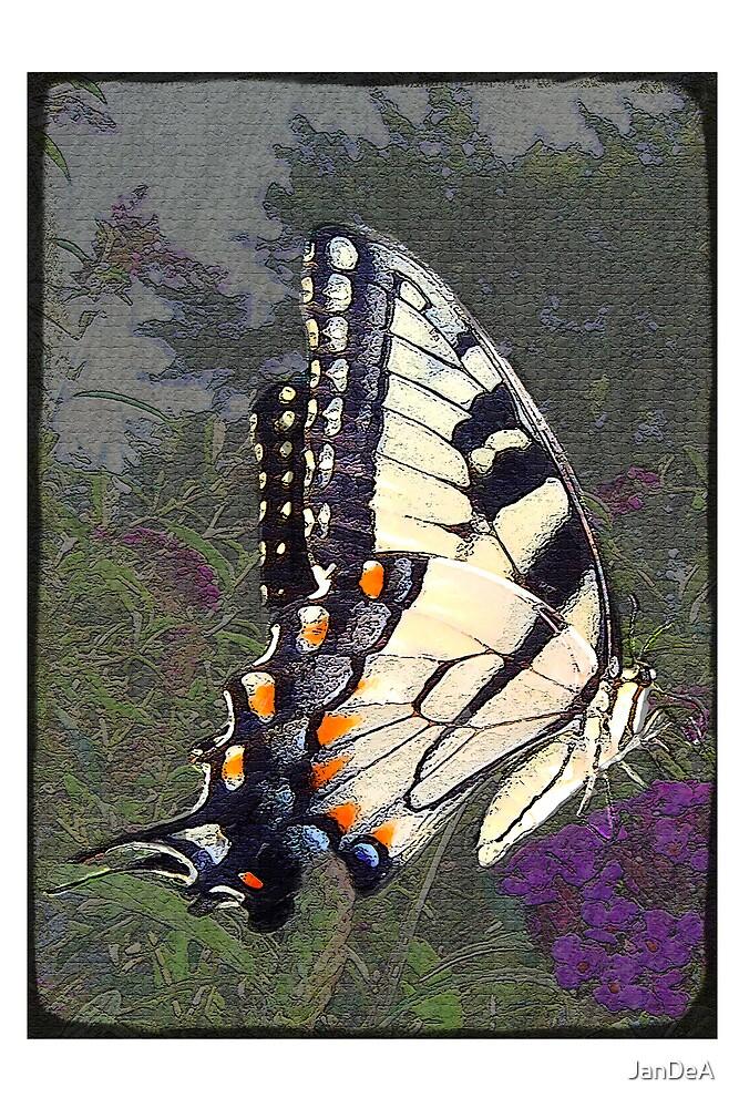 Vintage Butterfly by JanDeA