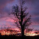 Halloween Tree, Magilligan, County Derry, Ireland by mikequigley