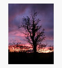 Halloween Tree, Magilligan, County Derry, Ireland Photographic Print