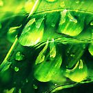 Raindrops by tropicalsamuelv
