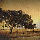 Tea-tree texture by bally58