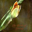 A New Spring © by Dawn Becker