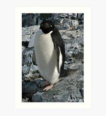 Adelie penguin 3 Art Print