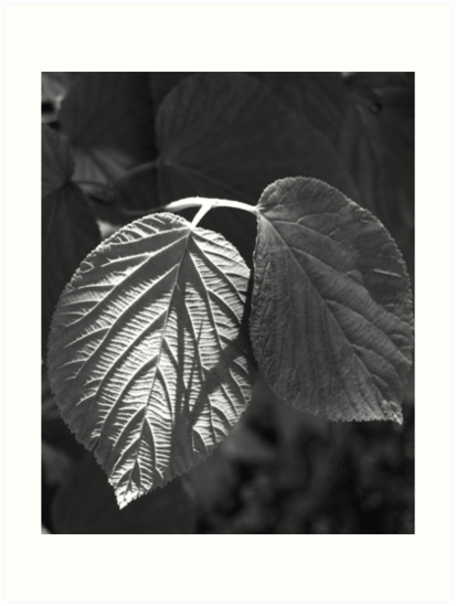 Dappled Light on Leaves by Veronica997