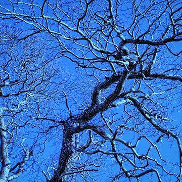 Frozen tree by GoatGirl