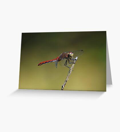 Meadowhawk Greeting Card