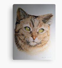 Cat coloured pencil drawing Canvas Print