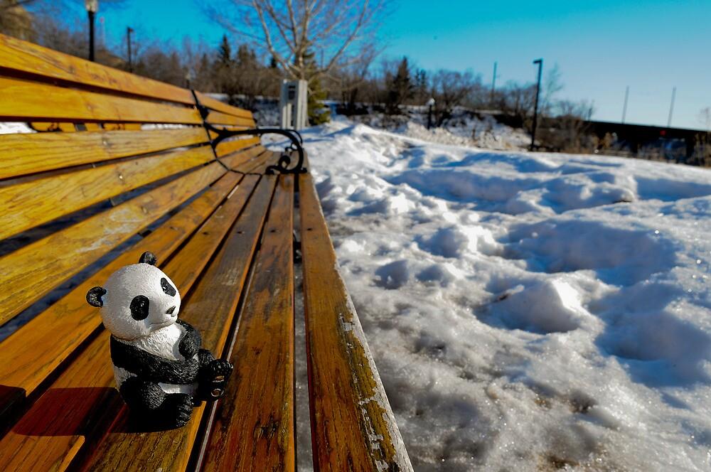 Mr Panda by Rey Albert
