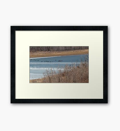 ice flutter Framed Print
