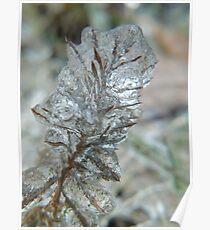 Ciliosum Glacialis  Poster