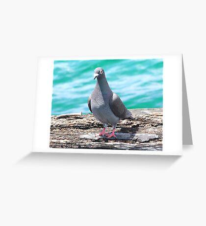 Jetty  pidgeon Greeting Card