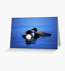 Family of Loons Greeting Card