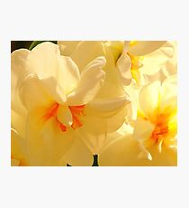 Vanilla Spring Photographic Print