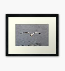 optimized for soaring 4 Framed Print