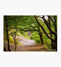Plymbridge Woods Photographic Print